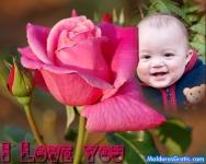 Rosas da paixão