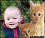 Gatinhos assustados