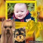 Cadela e cachorro