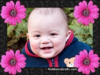 Borda com flores cor-de-rosa