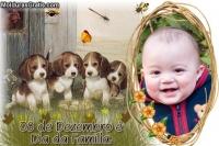 Família de cãezinhos