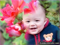 Flores cor-de-rosa desabrochando