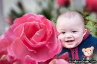 Jardim com Rosa cor-de-rosa