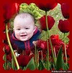 Jardim de rosas vermelhas