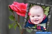 Moldura de pedras e uma rosa