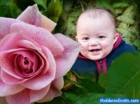 Linda Rosa cor-de-rosa