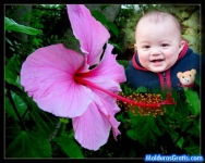Flor no jardim