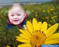 Estrela num campo de flores amarelas