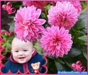 Jardim de flores cor-de-rosa
