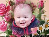 Botões de Rosas e Margaridas