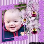 Orquídeas em um cartão lilás