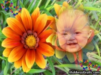 Flores alaranjada e corações coloridos