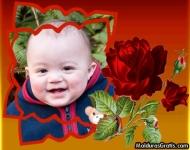 Botões de Rosas vermelhas