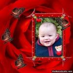 Borboletas e estrela sobre a Rosa vermelha