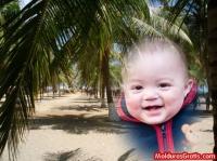 Coqueiros de praia